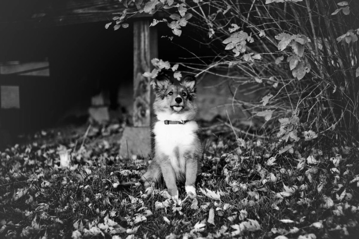little-shasta-black-and-white